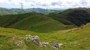 Wellington skyline track views