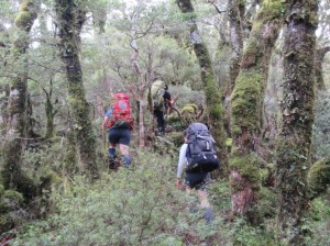 Up close and personal with the vegetation on Te Mara – small, serrated … silver beech!