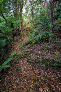 Mitre-Flats-track-in-forest