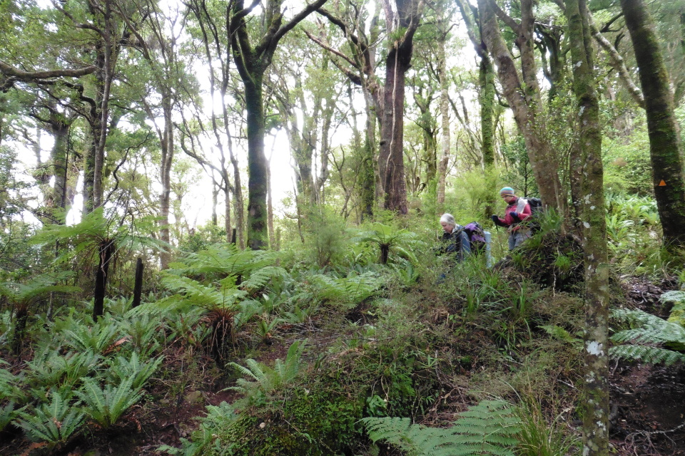 Coming down the Totara Creek Track