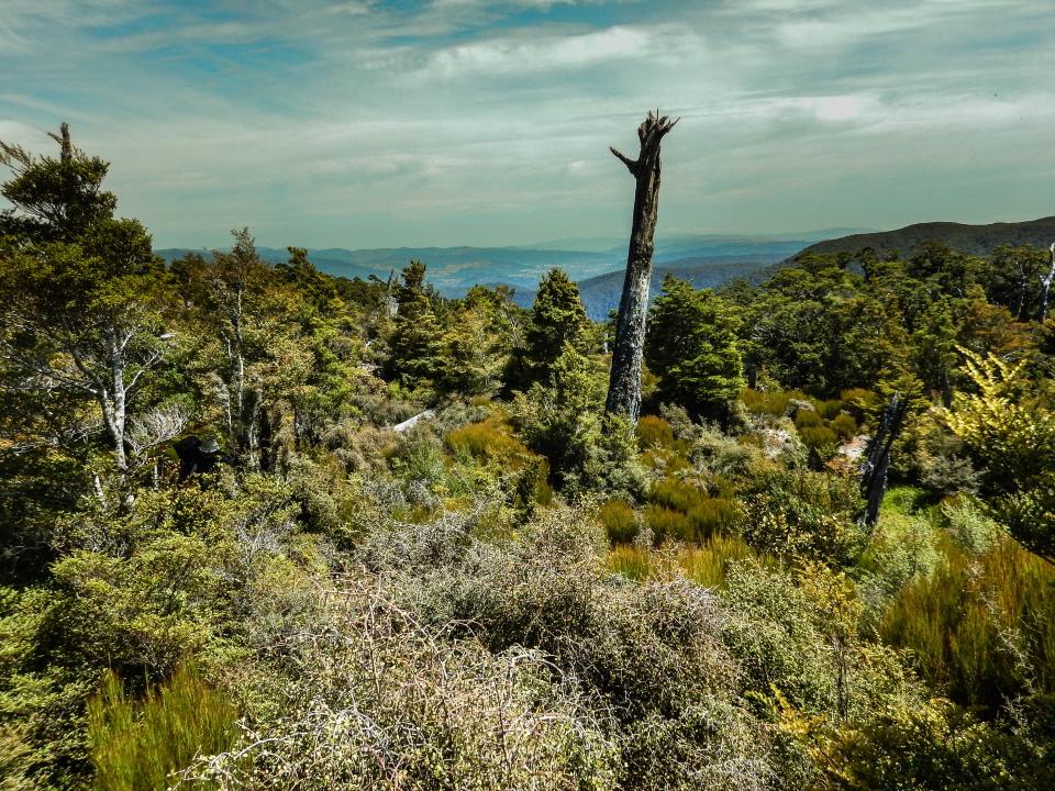 Quion Ridge