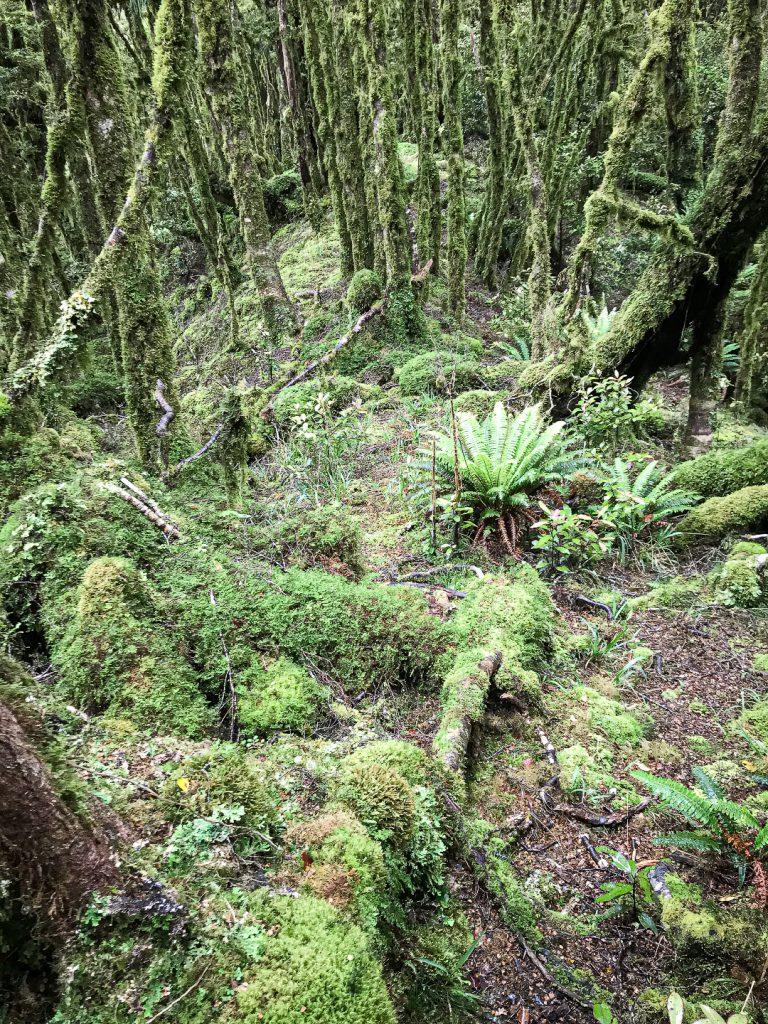 Oriwa Ridge