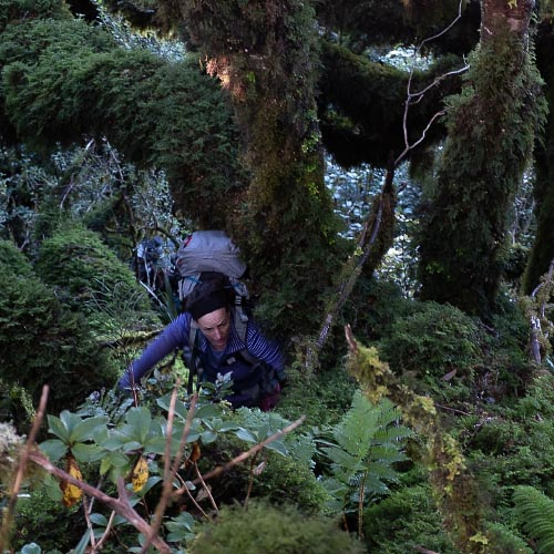 Dense NZ bush