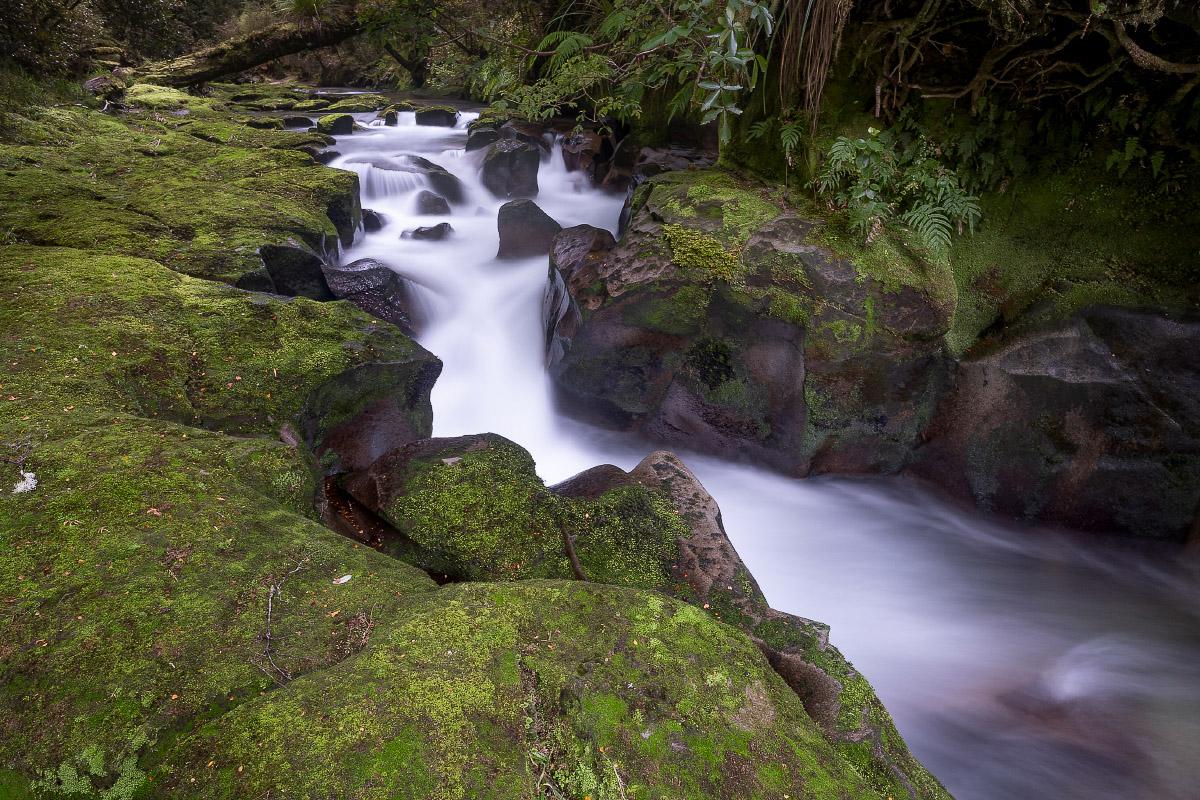 Bush Stream