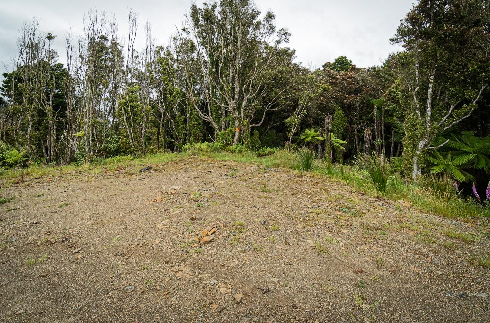 Otaki Forks temporary access track native forest