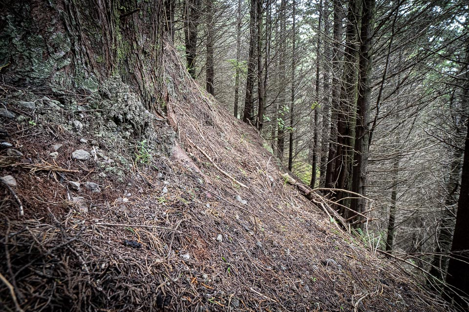 Otaki Forks temporary track up the steep spur