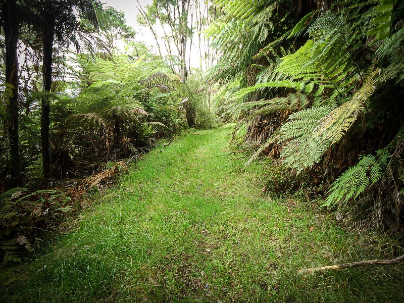 The old road track – easy running ground