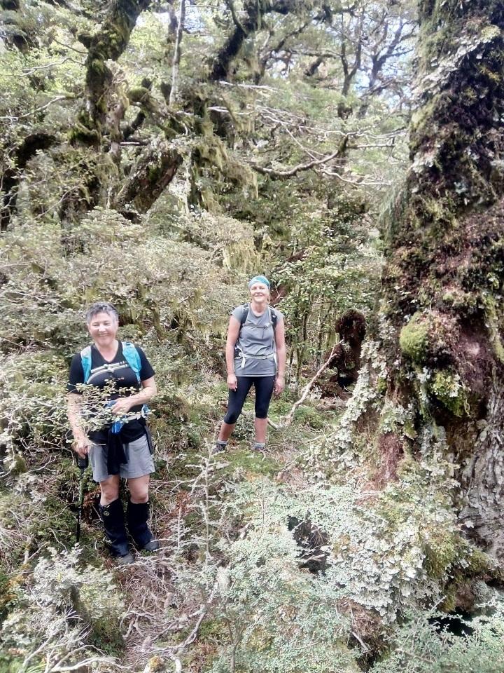 Tramping through thick vegetation