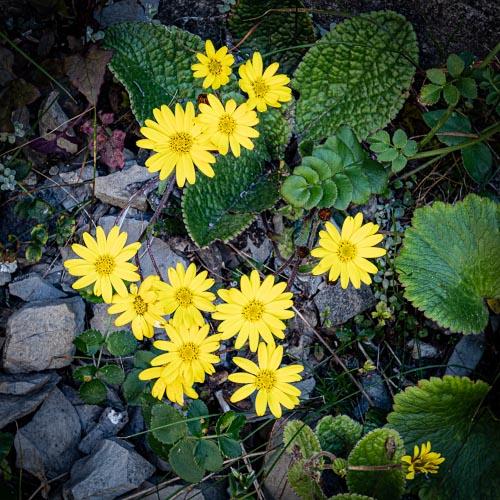 Matiri Range flowers