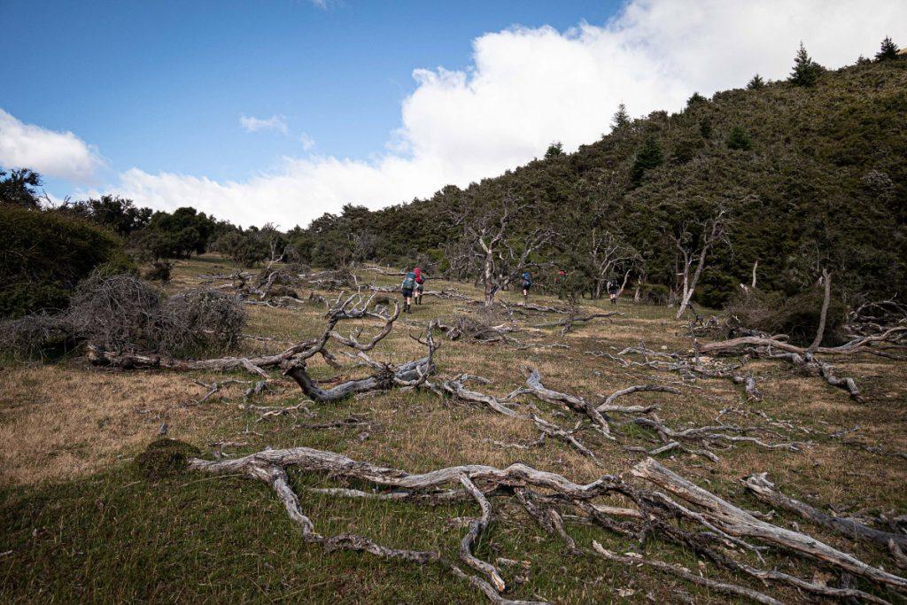 Trampers walking through a field of fallen tree trunks