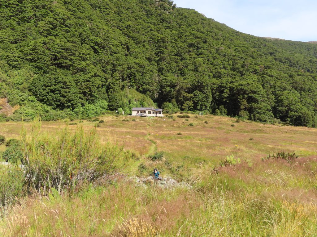 Grassy field with a hut at the bushline