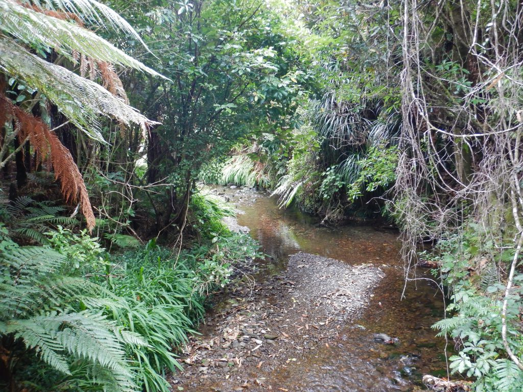 Stream flowing through bush