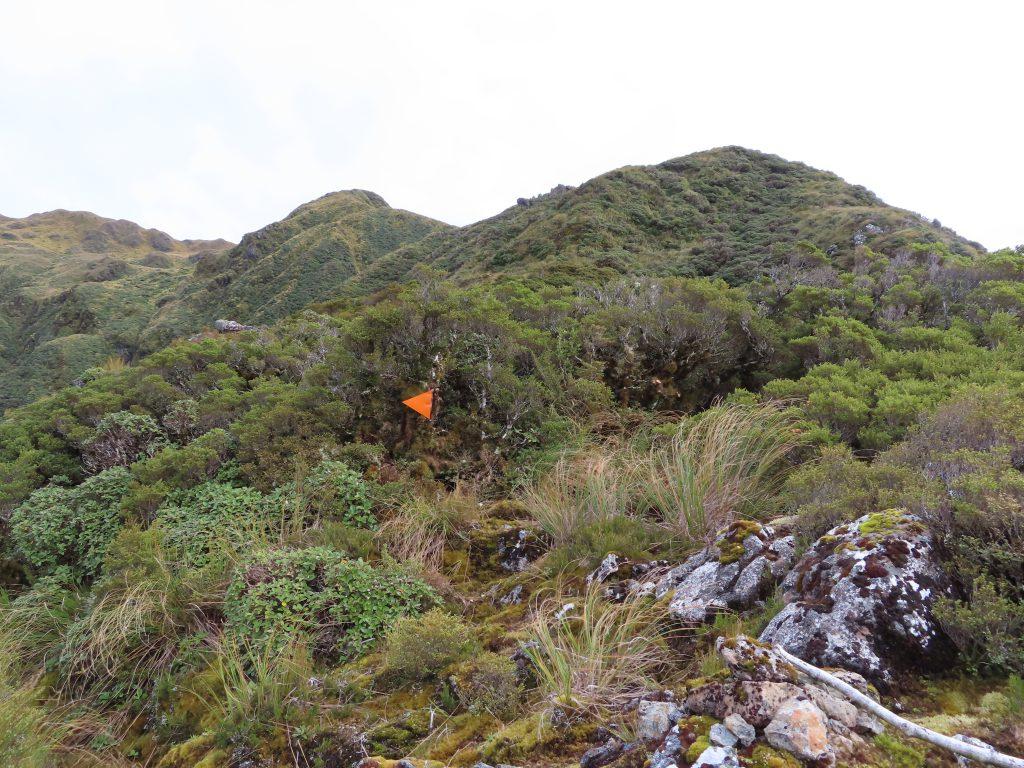 An orange track marker amongst bush