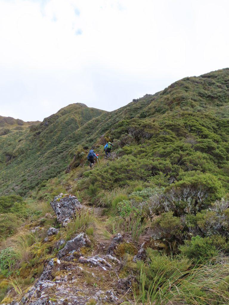 Trampers climb a hill through low bush