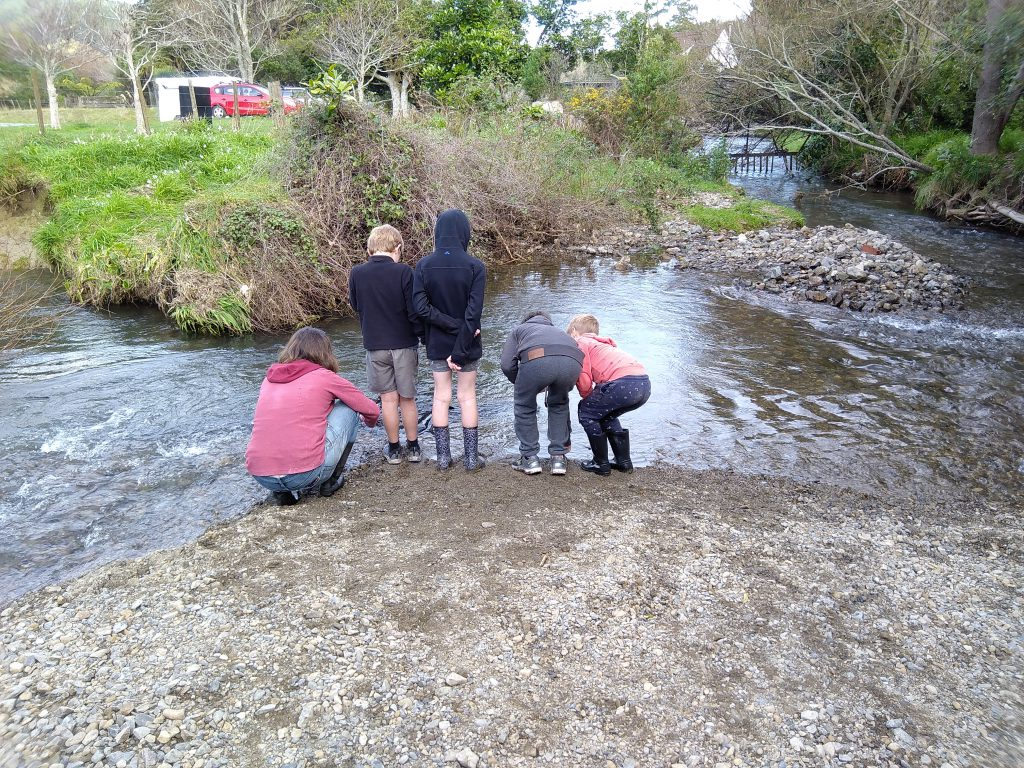 People looking at eels in a river