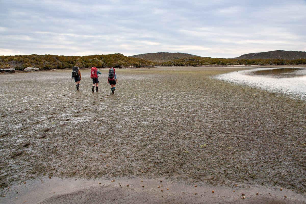 Cook Arm mud-flats at low tide